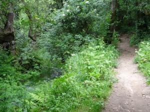 Greenbelt along a creek