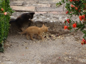 A group of kittens playing in the Alhambra