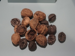 Walnuts from the 15th - 17th Century