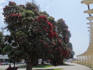 Beautiful Bottlebrush Tree